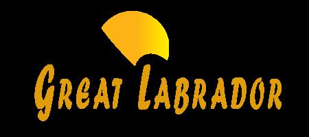 Great Labrador